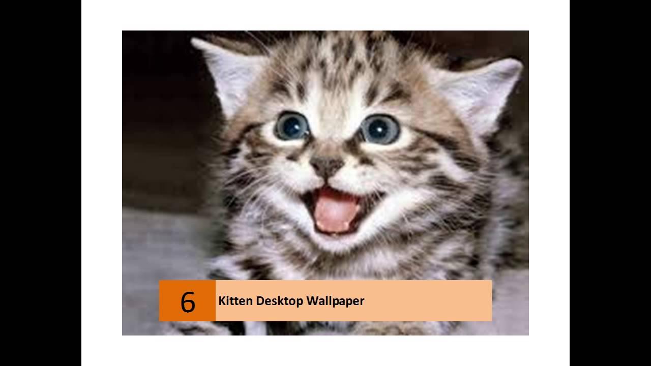Cute kitten wallpapers youtube cute kitten wallpapers altavistaventures Images