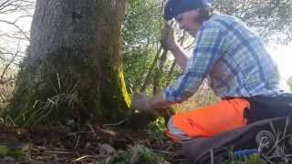 Treasure under tree part 2