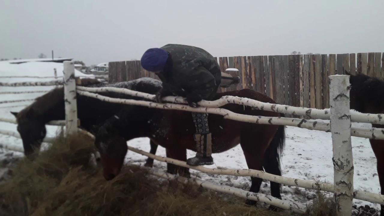 Девушка верхом на необученной лошади,БЕЗ УЗДЫ, ПЕРВЫЙ РАЗ!!!