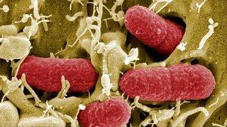What is Coronavirus? Causes, Signs and Symptoms of Coronavirus Infection