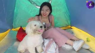 Дрессировка собак милой владелицей траты времени с забавным щенком | Красивая девушка и животные