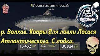 Русская рыбалка 4. р. Волхов. Точка для ловли - Лосось Атлантический.