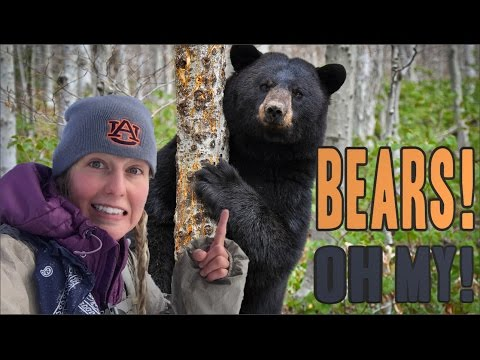 Dealing With Black Bears in the Woods
