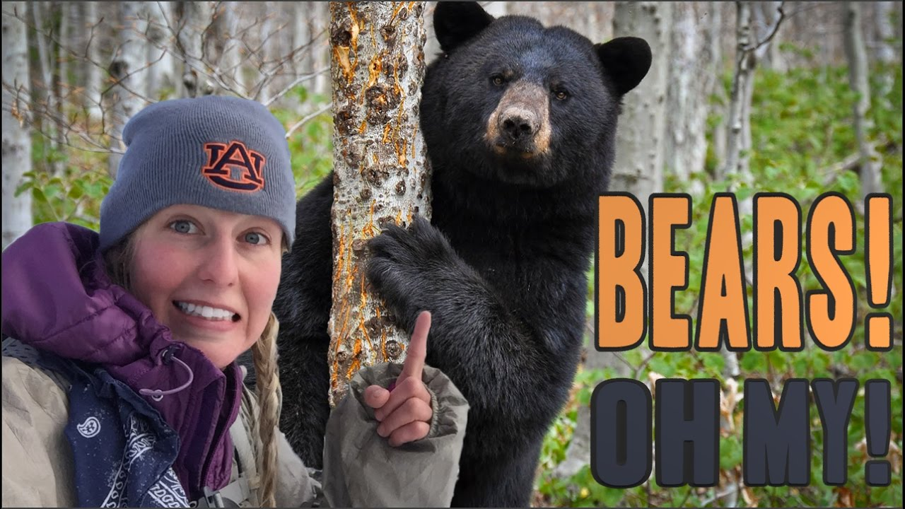 Image result for picture of bears in the woods