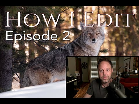 HOW I EDIT -  Episode 2  Coyote in Yellowstone