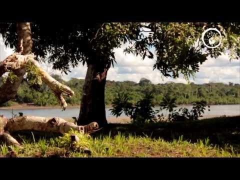 """Documental - Sepahua """"Tierra de Magia y Tradición"""""""