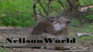 Мир Диких Животных- Королевство Обезьян