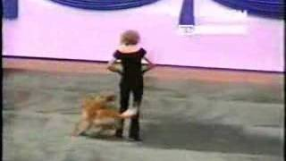 Golden  Retriever Dancing With Lady Owner