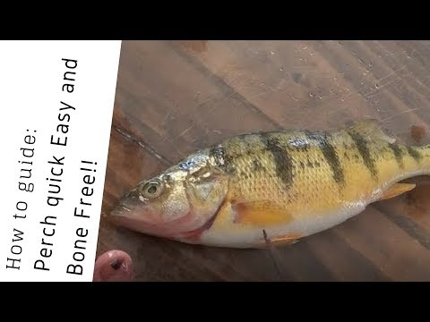 Survive off Fish! How to clean Perch Quick Easy and Boneless!