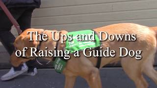 Ups and Downs of Raising a Guide Dog