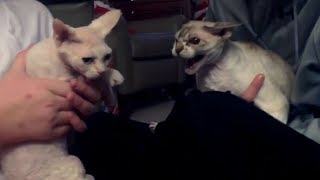 WEIRD BEHAVING CATS and DOGS - You'll LAUGH your SOLE OUT while watching