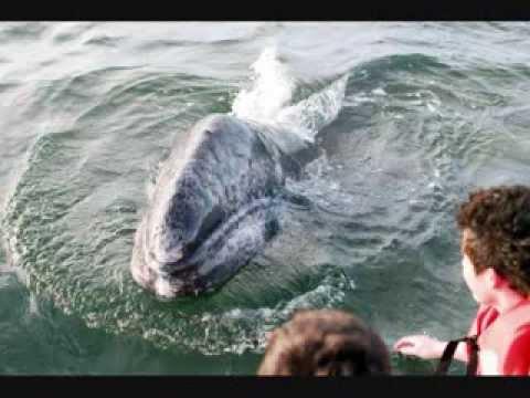 Avistamiento de ballenas en La Paz BCS
