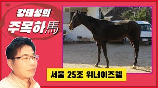 [주목하馬] 서울 25조 위너이즈웰