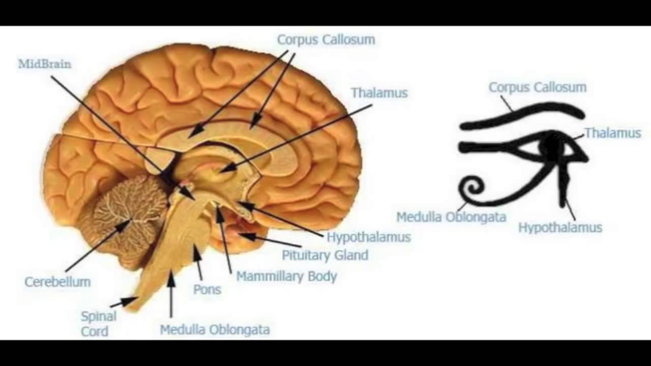 Open your 3rd eye in 7 seconds pineal gland exercises hd 720p youtube open your 3rd eye in 7 seconds pineal gland exercises hd 720p ccuart Gallery