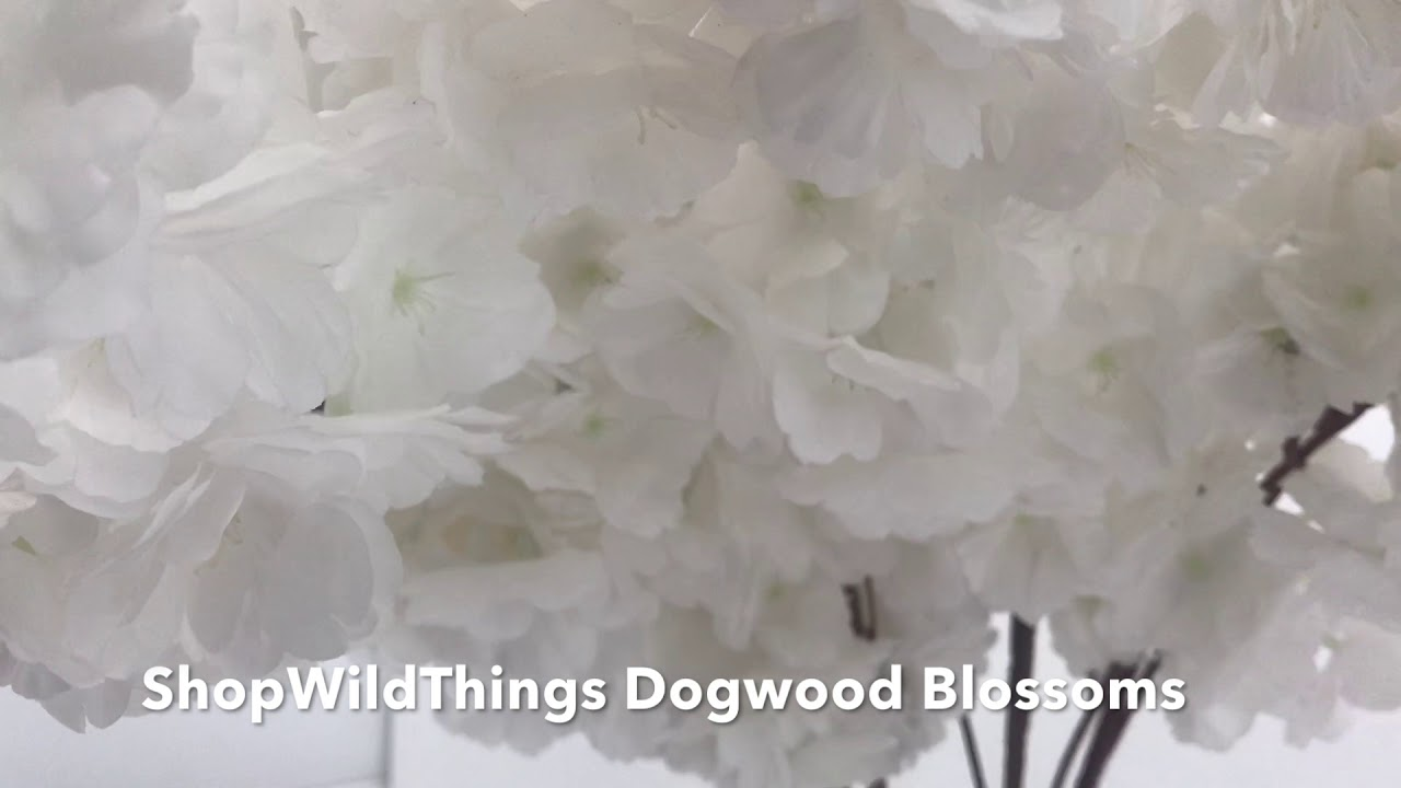 Shopwildthings White Dogwood Flower Blossom Branches Youtube