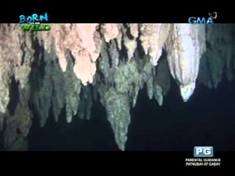 Born to be Wild: Underwater Caverns: Inside Palau's dangerous Chandelier Cave