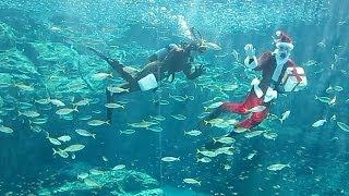 佐世保市の九十九島水族館「海きらら」で、クリスマスを控え、サンタと...