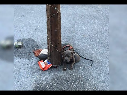 A Rescue Worker Was Stunned To Find This Abandoned Dog Tied To A Pole Outside Her Cat Shelter