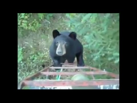 Man Talks Bear out Of Attacking Him ©