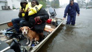 Volunteer groups helping in Florence rescues