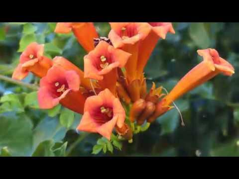 Les fleurs de ton jardin Agnès BOURGEOIS - YouTube