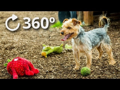 360º Puppy Play 4K - DublinSPCA