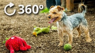 360º Puppy Play 4K  DublinSPCA