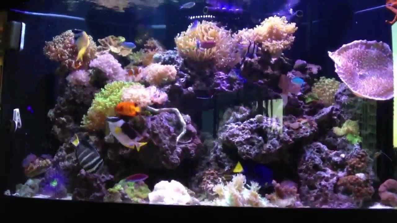 92 Gallon Reef Corner Tank