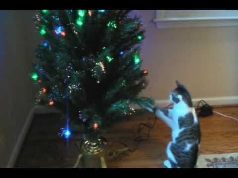 Oscar Cat Attacks Christmas Tree - YouTube