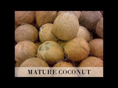 Fresh Coconut Suppliers