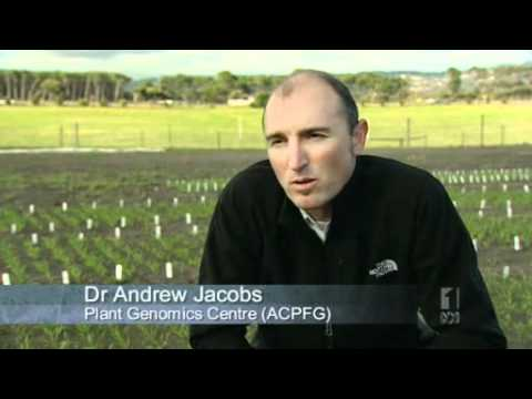 CSIRO GM Wheat - Greenpeace Activists Caught - Food on trial - Landline - ABC.flv