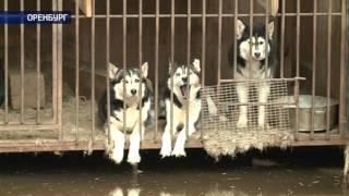 В Оренбурге затопило питомник хаски