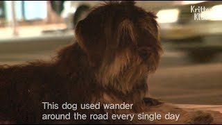 Lost Dog's Reaction When He Found His Owner In 4 Months | Kritter Klub