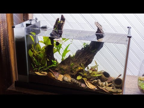 Making a Blackwater Betta Aquarium