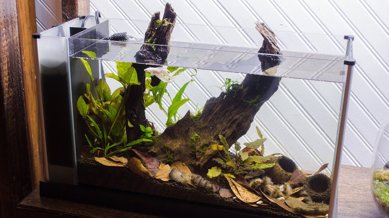 making a blackwater betta aquarium youtube