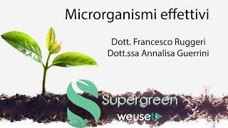 Microrganismi effettivi o efficaci (EM) - Cosa sono e a cosa servono - Lotta biologica con batteri