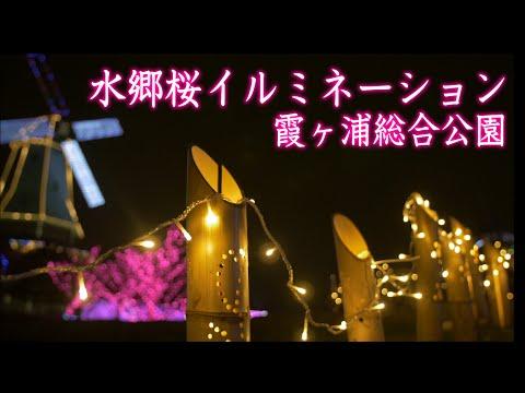 "[4K]光がつくる""Art""水郷桜イルミネーション"