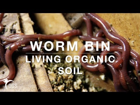 Worm Bin simple, quick, and low cost DIY:  Making Living Organic Vermicompost in a Smart Pot