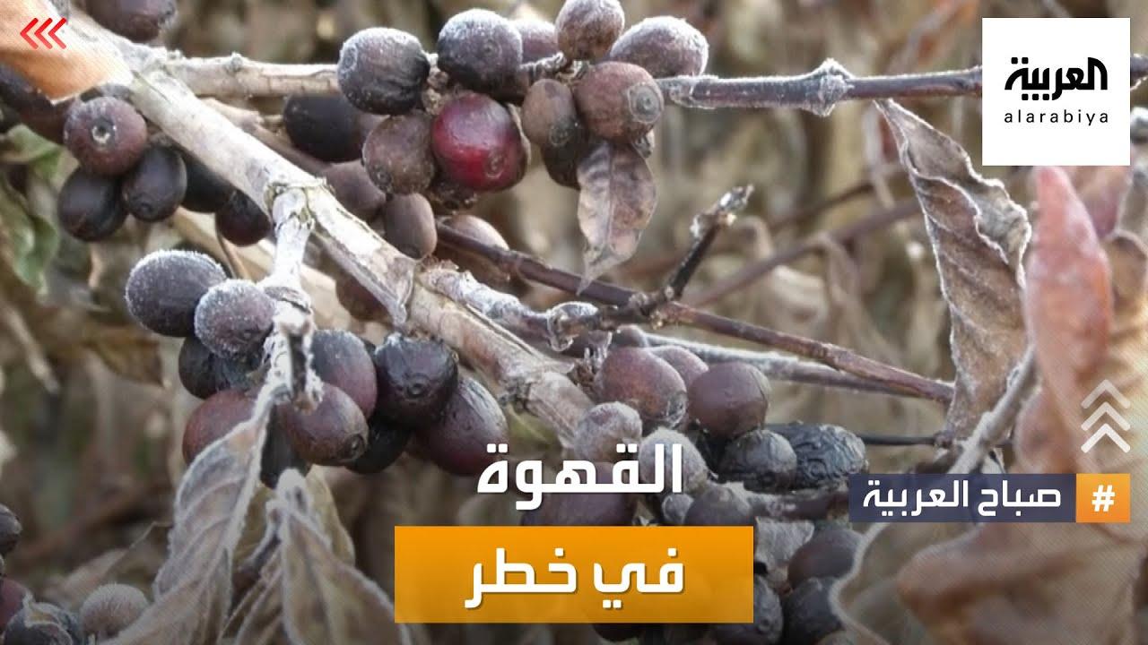 صباح العربية | فنجان قهوتك الصباحي في خطر!  - نشر قبل 2 ساعة