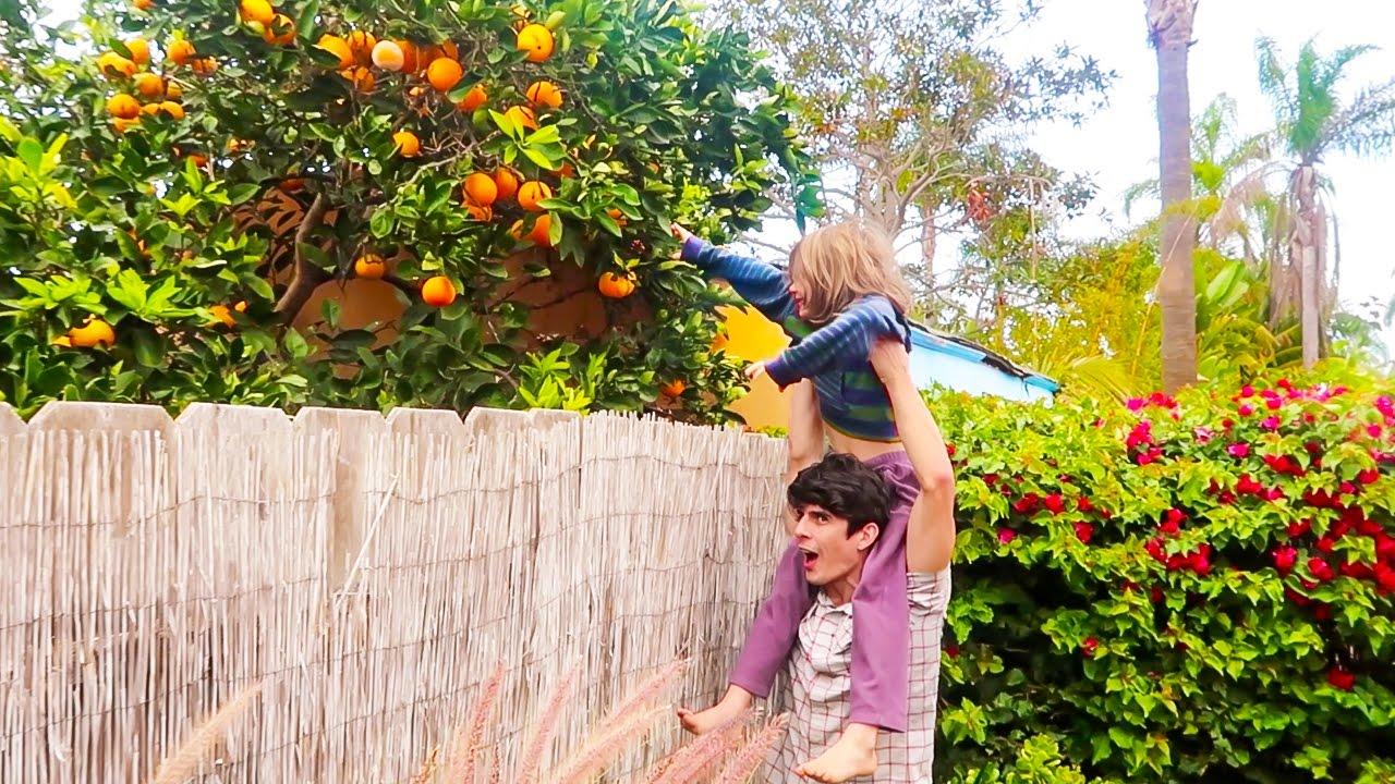 orange tree in the backyard youtube