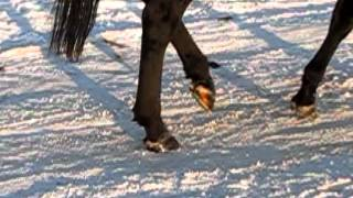 Опорная фаза и фаза отрыва ноги лошади на шагу.MOV