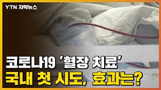 [자막뉴스] 코로나19 '혈장 치료' 국내 첫 시도, 효과는? / YTN