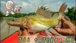 Trùng hổ và tỏi: Săn Cá Lăng Sông Bé Quá Nhạy ✅