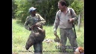 caza de venados y vaquiros con perros