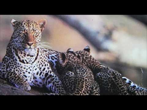 Leopard's Lair Resort - Bera, Rajasthan