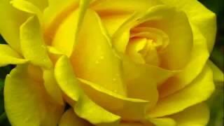 fitoterapia para adelgazar naturalmente bellacoso