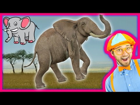 Thumbnail: Learn about Animals for Toddlers – Funny Zoo Animal Sounds – Elephants with Blippi