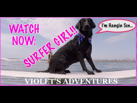 THIS DOG CAN SURF :  E8 Violet's Adventures