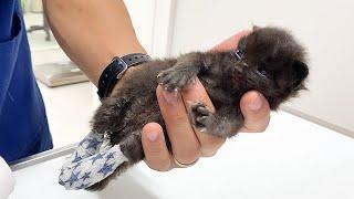 足を負傷している赤ちゃん猫を病院へ