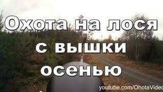 Охота с вышки на лося осенью видео онлайн 2012-2013 Moose hunting in Russia.